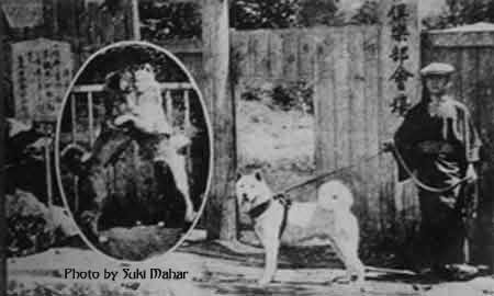 Akita Inu History Guardian Of The Emperor Kennel
